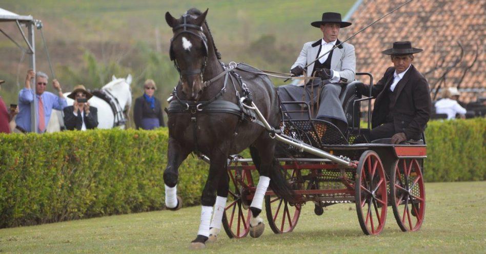 Cavalos Interagro campeões nos rankings Abrat e CBH são estrelas da ExpoCavalos