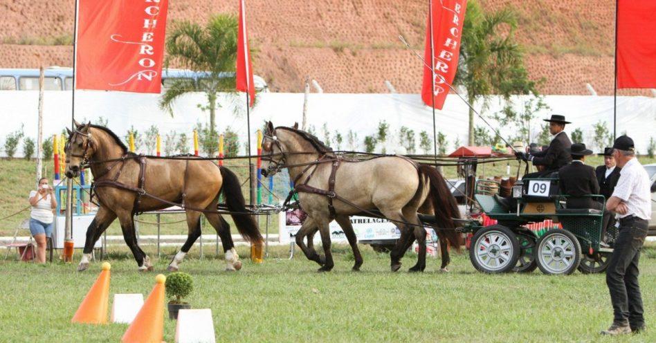 Interagro ensina o que é a atrelagem no Horse Brasil