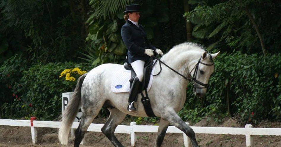Cavalos Interagro conquistam etapas de adestramento e equitação de trabalho