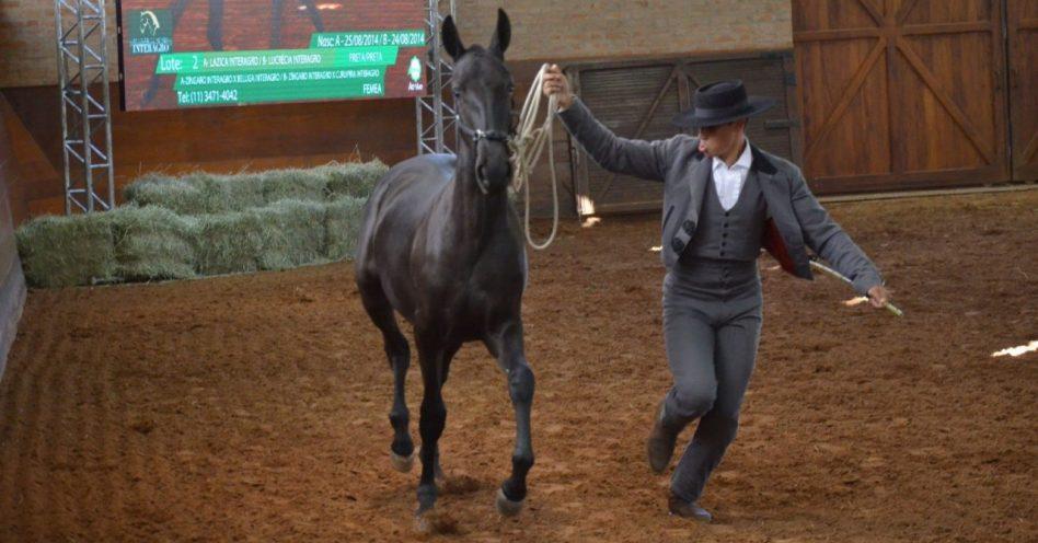 Leilão Interagro mostra força do cavalo lusitano em ambiente de pessimismo