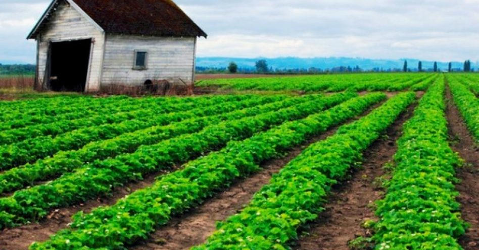 Dinamarca é o primeiro país com agricultura 100% orgânica por lei