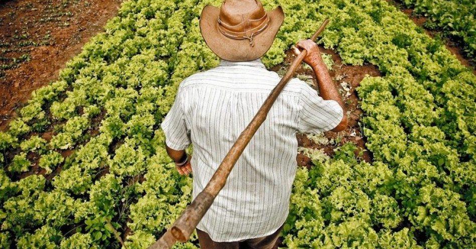 Governo de SP anuncia crédito de até R$ 500 mil para agricultor iniciar produção orgânica