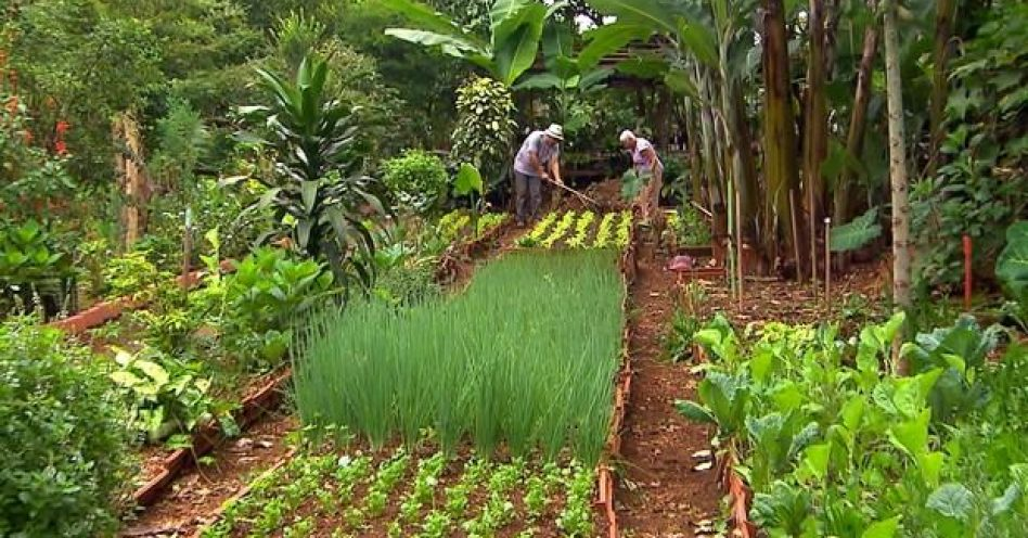 Terrenos baldios em São Paulo são transformados em hortas orgânicas