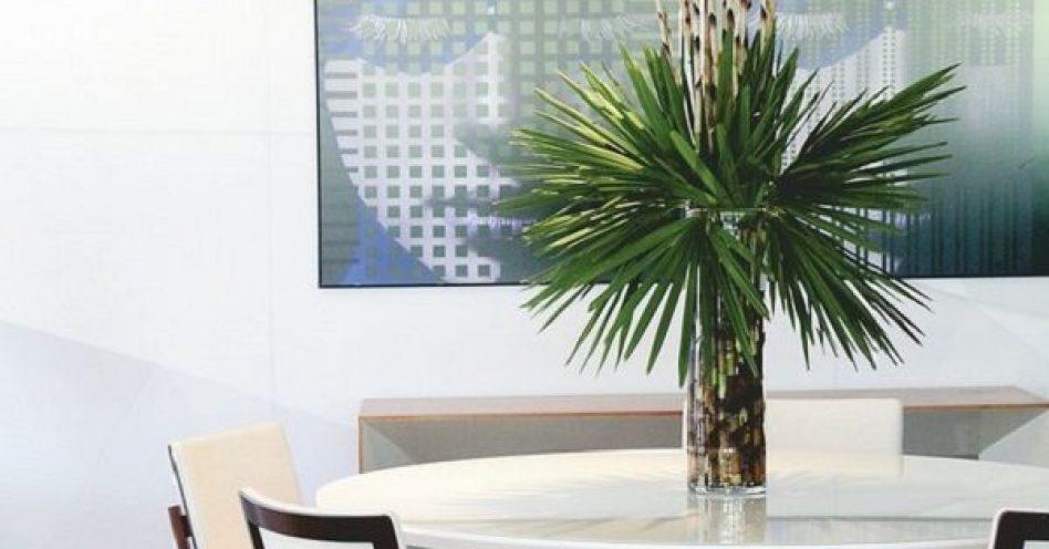 Modernas e práticas: conheça a nova tendência de folhagem para decoração
