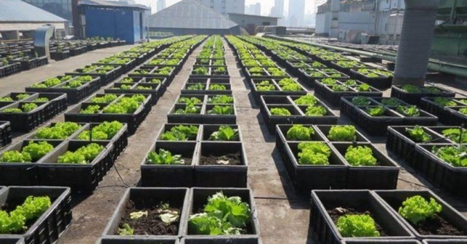 Shopping Eldorado de São Paulo transforma telhado em horta sustentável