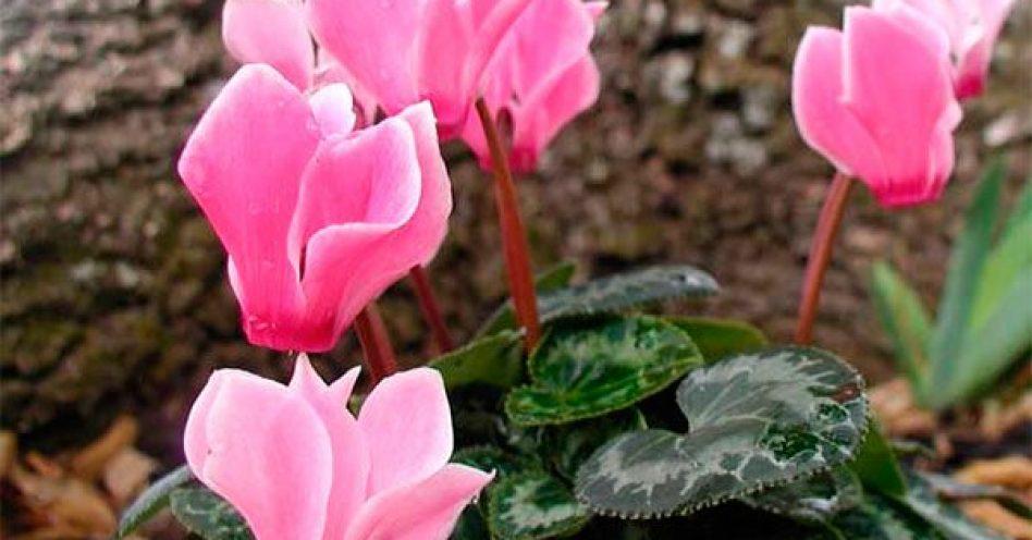 Flores resistentes às baixas temperaturas para incluir em projetos de paisagismo