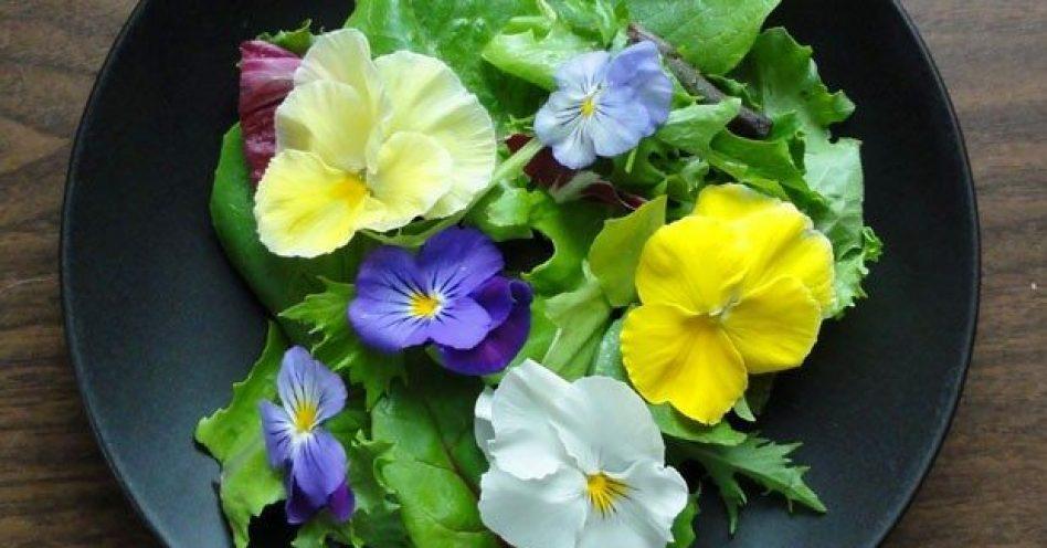 Como cultivar e usar flores comestíveis em receitas
