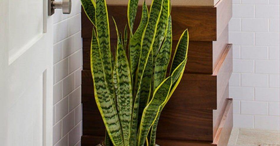 Conheça cinco espécies de plantas para banheiros