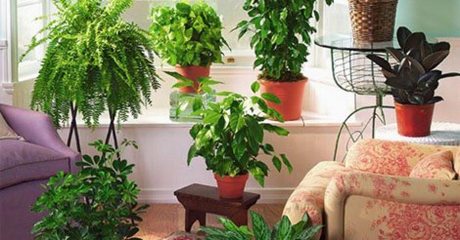 Cinco plantas que filtram o ar em ambientes fechados
