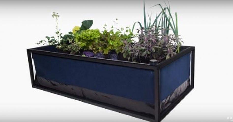Horta inteligente é fácil de cuidar e não exige grande espaço