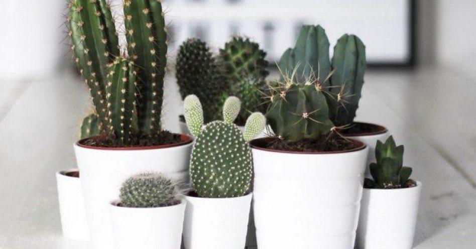 As melhores plantas para decorar o escritório