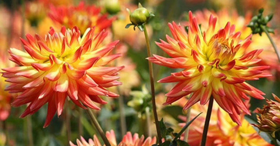 Identifique as espécies de flores mais recomendadas para o cultivo no verão