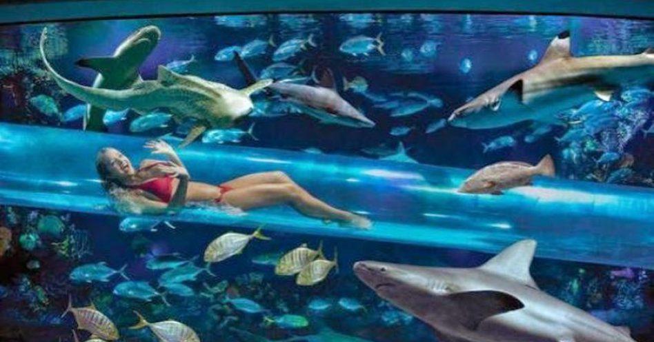 Nadando com os tubarões
