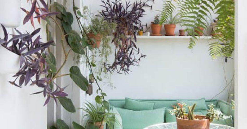 Plantas coloridas enriquecem a decoração