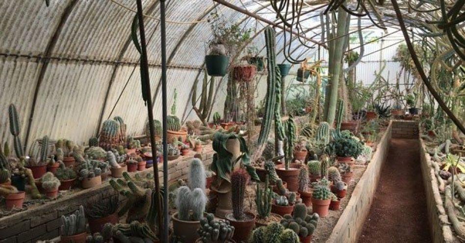 Califórnia abriga primeiro cactário do mundo, batizado de Moorten Botanical Garden