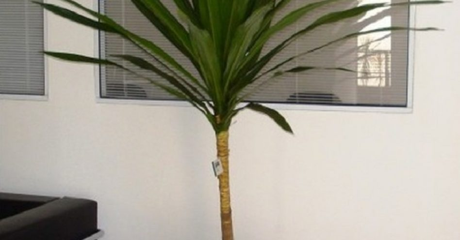 Confira as plantas mais adequadas para pequenos espaços