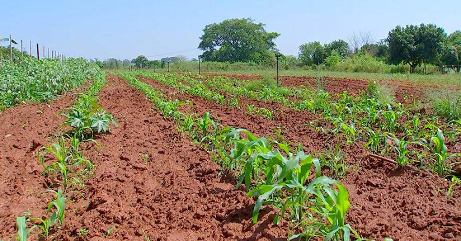 Confira as principais diferenças entre a horta convencional e a orgânica