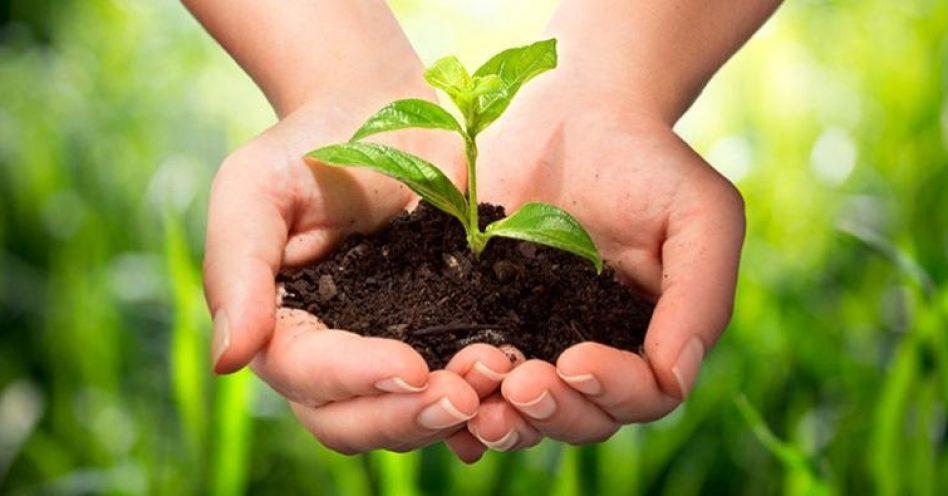 Programa ajuda agricultores de SP que ainda não têm o selo de orgânico