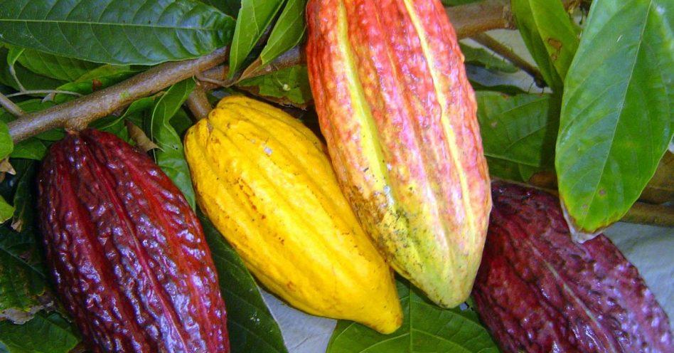 Ovo de chocolate orgânico é opção saudável para a Páscoa