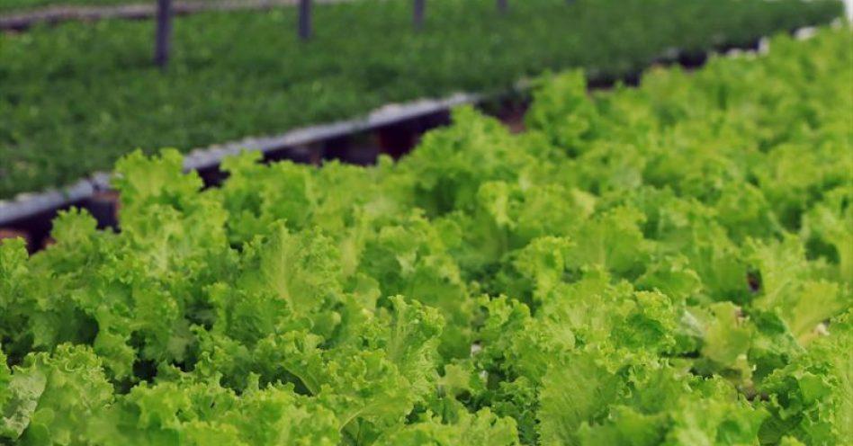 MAPA distribui documento com técnicas de cultivo de alimentos orgânicos