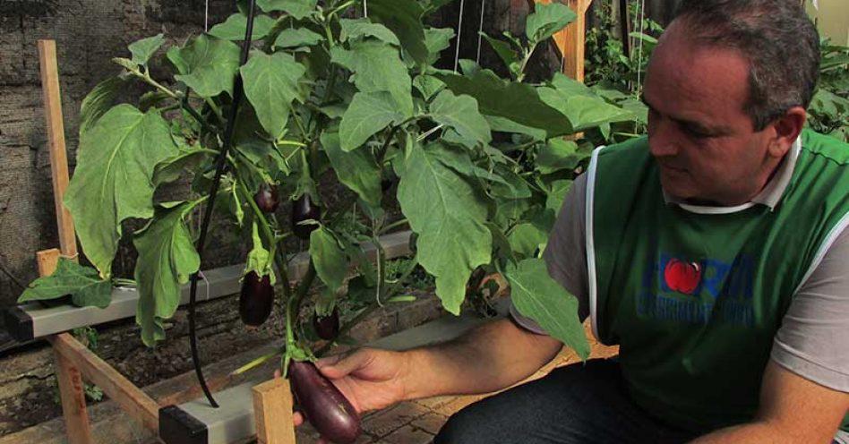 Hortas orgânicas transformam interior de SP com alimentação e vida mais saudáveis