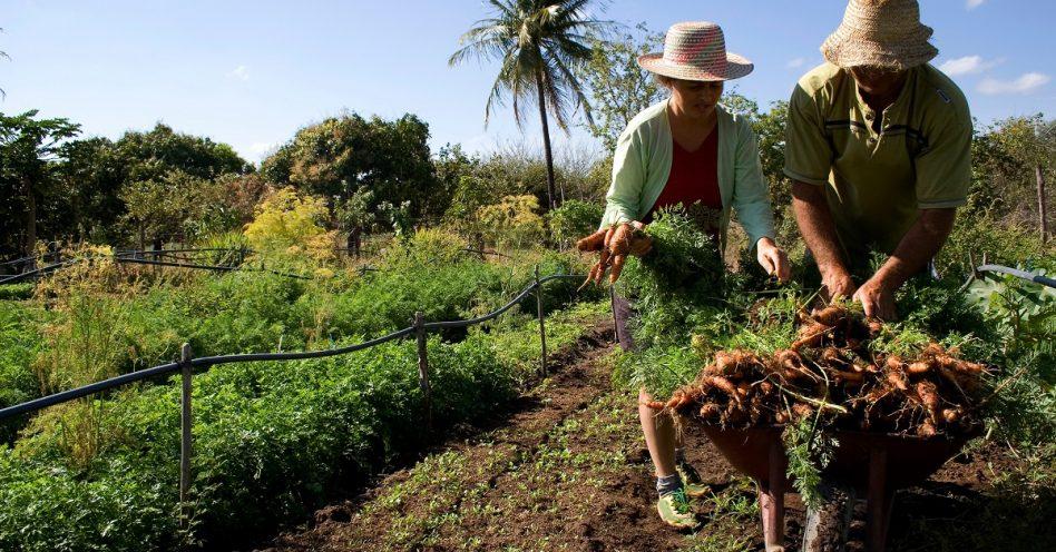 Conab abre inscrições para formação de estoques por meio de agricultura familiar