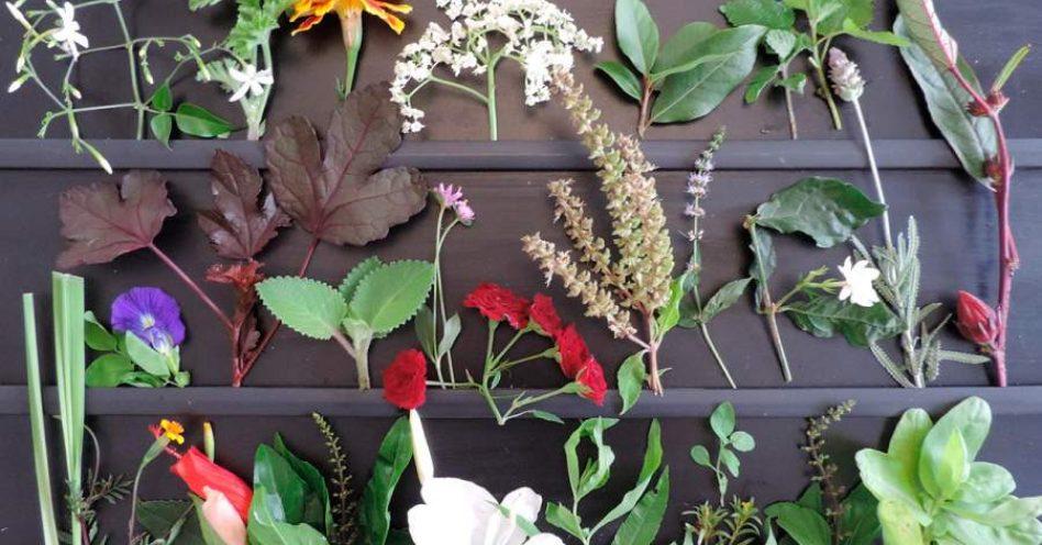 SESC realiza oficina gratuita de flores comestíveis e PANCs