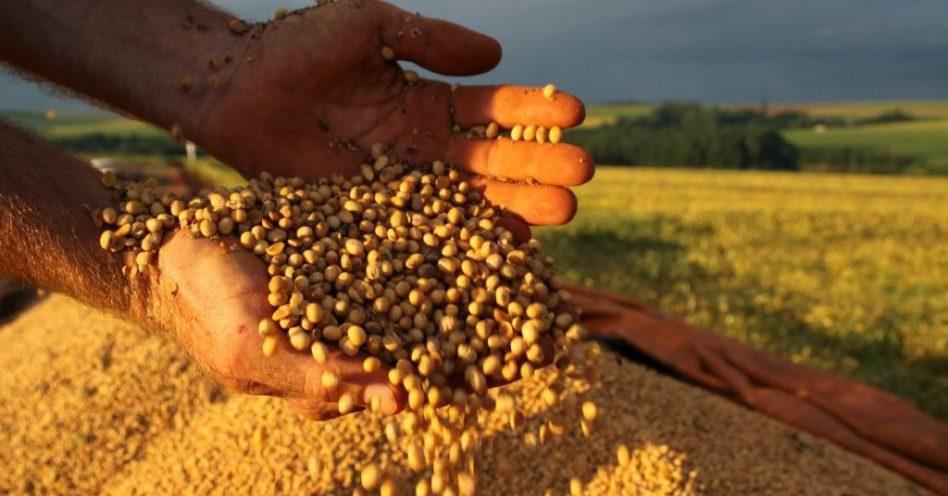 Embrapa desenvolve fertilizante orgânico nitrogenado