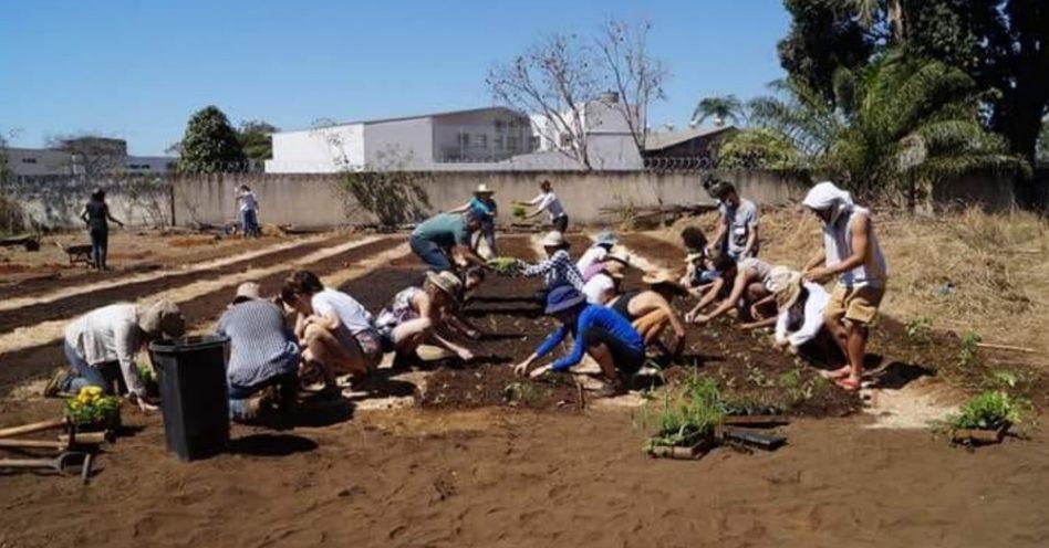 ONG cria projeto de hortas orgânicas
