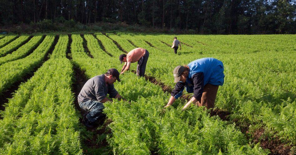 Agricultura sustentável reduz custos e eleva produtividade