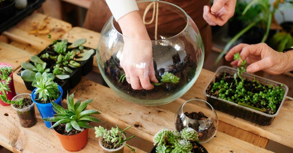 Cultivo dos mini jardins e terrários pode ser aliado da saúde mental