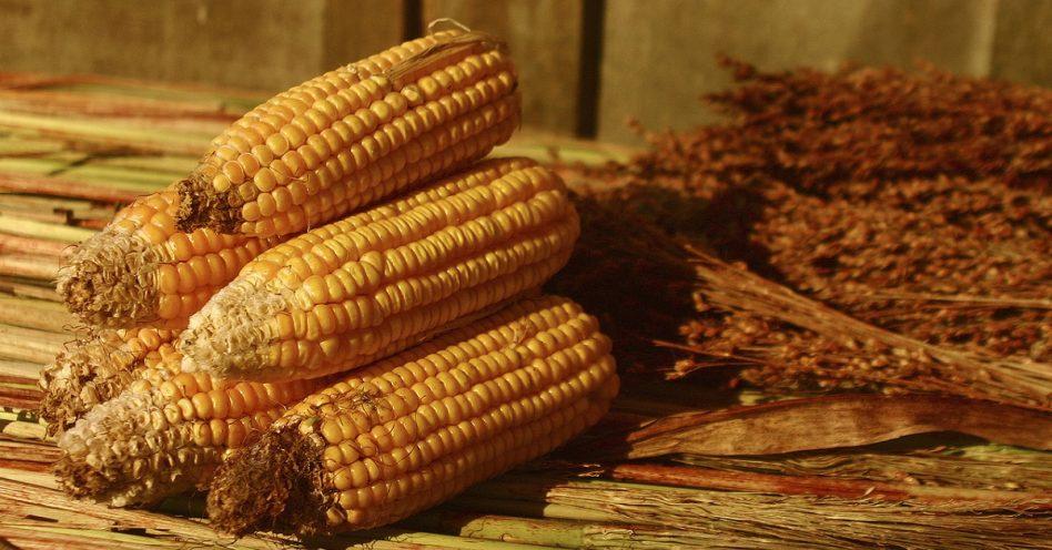 Por que os alimentos orgânicos são mais caros?