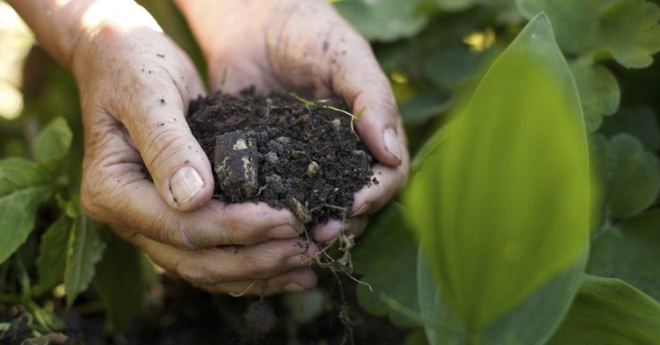 5 dicas para fazer adubo com o lixo orgânico
