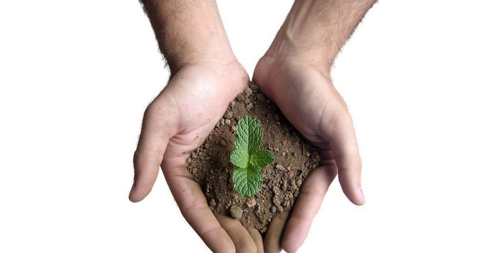 Entenda a diferença entre solo orgânico e inorgânico