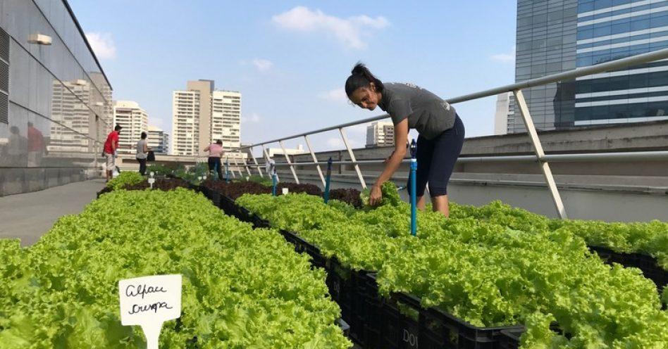 Empresária cultiva horta no telhado de empresas