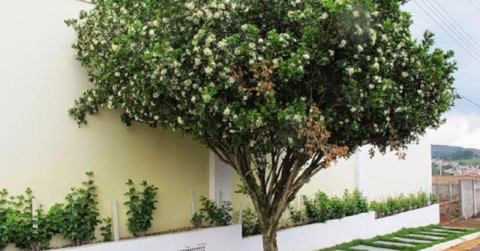 10 árvores que você mesmo pode plantar na sua calçada