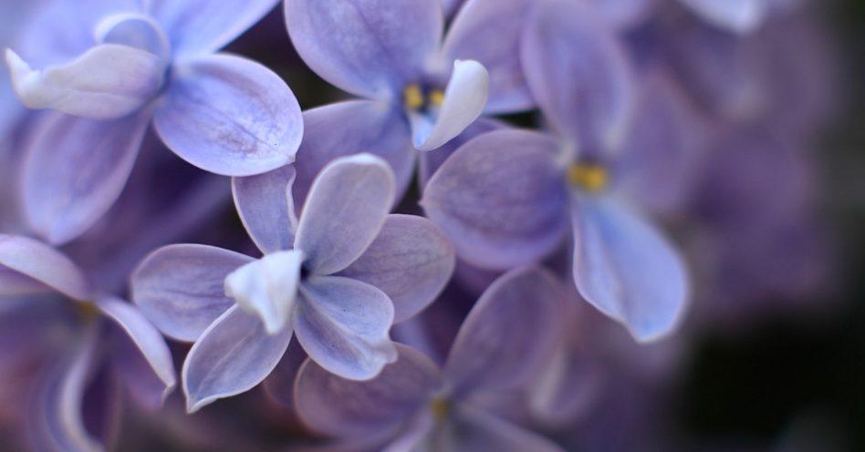 Flores precisam de cuidados especiaisna Primavera