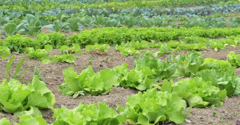 5 dicas para o produtor de orgânicos se regularizar