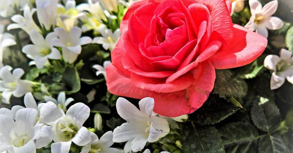 Saiba como escolher as flores ideais para cada ocasião