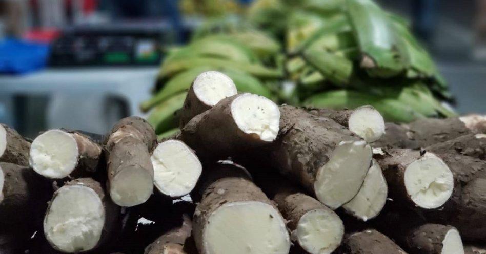 Cresce número de produtores orgânicos no Amazonas