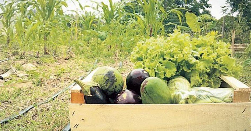 Produto orgânico é preferido por 45% dos consumidores